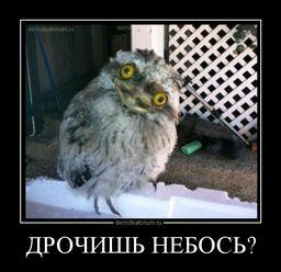 https://demotivatorium.ru/sstorage/3/2012/12/0412120845404762.jpg