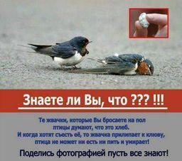 https://pp.vk.me/c312916/v312916391/8bda/B60-FWdAUYE.jpg