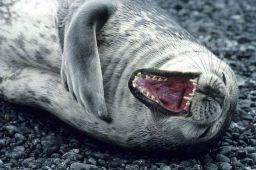 http://roflzoo.com/pics/042010/rofl-seal-big.jpg